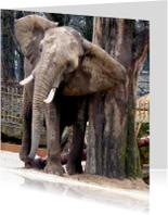 Dierenkaart olifant met jeuk