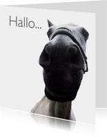 Dierenkaart paard hallo