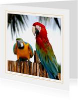 Dierenkaart Papegaaien