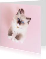 Dierenkaart Roze - kitten staand - Kat
