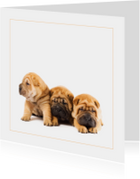 Dierenkaart Sharpei puppies