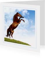 Dierenkaart steigerend paard 2
