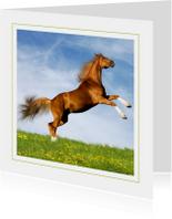 Dierenkaart steigerend paard 3
