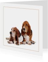 Dierenkaart Twee lieve honden