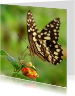 Dierenkaart Vlinder op bloem