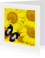 Dierenkaart vlinder op gele bloemen