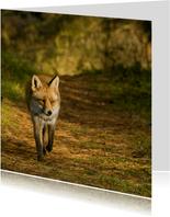 Dierenkaart vos loopt naar je toe