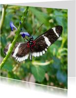 Dierenkaart zwart met witte vlinder