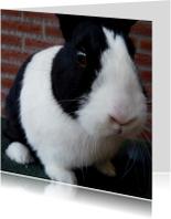 Dierenkaart zwart wit konijn