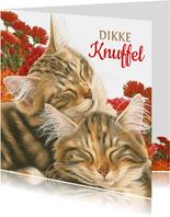 Dikke Knuffel kaart met katten en bloemen
