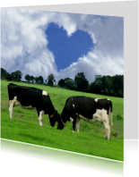 Echte liefde Koeien