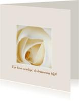 een leven vervliegt - witte roos