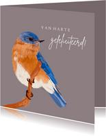Felicitatiekaart blauw oranje vogel