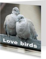 Felicitatiekaart lovebirds2