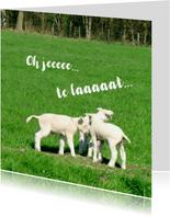Fotokaart 3 Lammetjes in 't gras