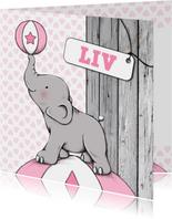 Geboorte meisje olifant bal - IH
