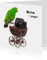 Geboortekaart | Hoera een jongen | Papegaai kinderwagen