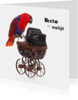 Geboortekaart | Hoera een meisje | Papegaai kinderwagen