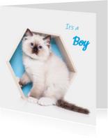 Geboortekaart - Kitten It's a boy
