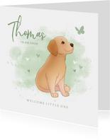 Geboortekaartje puppy groene achtegrond met hartjes vlinder