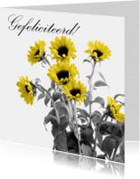 Verjaardagskaarten - Gefeliciteerd zonnebloemen