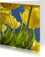 gele tulpen 1