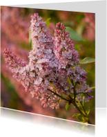 Bloemenkaarten - Geurende sering in avondzonnetje