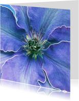 Grote afbeelding bloem paars