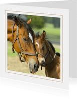 Grußkarte Pferdemotiv