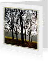 Condoleancekaarten - Hoge bomen in tegenlicht