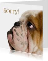 Hond kijkt schuldig-isf