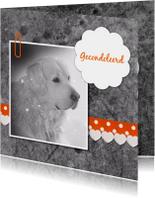 Hond met linten - DH