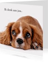 Ik denk aan jou hond