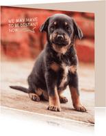 Ik mis je, kaart met lieve zwarte puppy