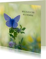 Jarigkaart  blauwe vlinder