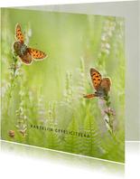 Verjaardagskaart vlinders in de zomer