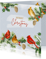 Kerst kardinaalvogeltjes