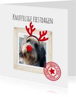 Kerstkaart met je huisdier