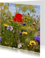 klaproos met andere bloemen