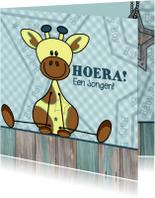 Lief jongetje geboren Giraffe