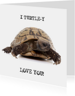 Liefde - I Turtle-y Love You - Schildpad