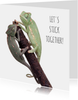 Liefde - Let's stick together - Kameleon