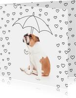 Liefde - Love hartjes bulldog