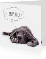 Liefde | mis je | Duitse dog puppy