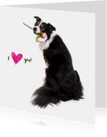 Liefdeskaart - Ik hou van jou - Border Collie met bloem