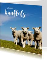Lieve Knuffels Lammetjes - Lente
