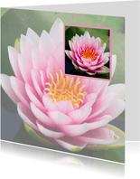 Lotusbloem in lotusbloem