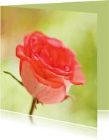 Moederdag kaart met een roze roos op een groene chtergrond
