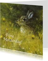 Moederdagkaart konijn in het wild