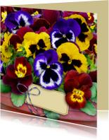 Mooie bloemenkaart gemengde Violen in pot